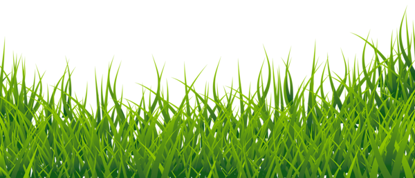 picture transparent library Grass clipart fodder. Picture alfabeto pinterest grasses