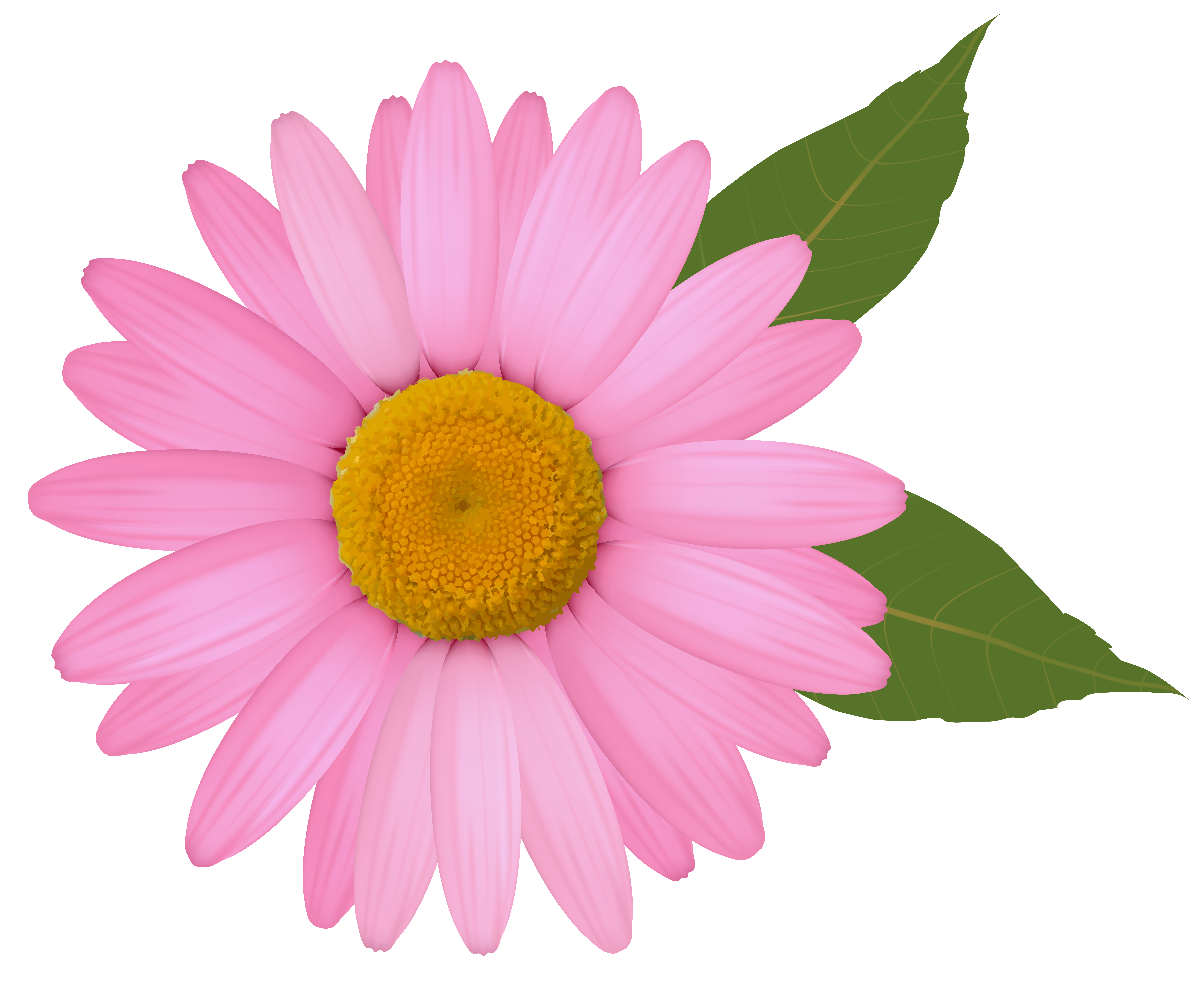 clip art transparent download Daisy clipart. Pink png image gallery