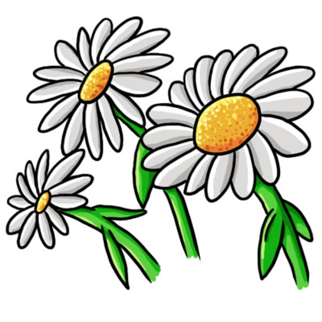 jpg download Daisy clipart. Free flower cliparts download