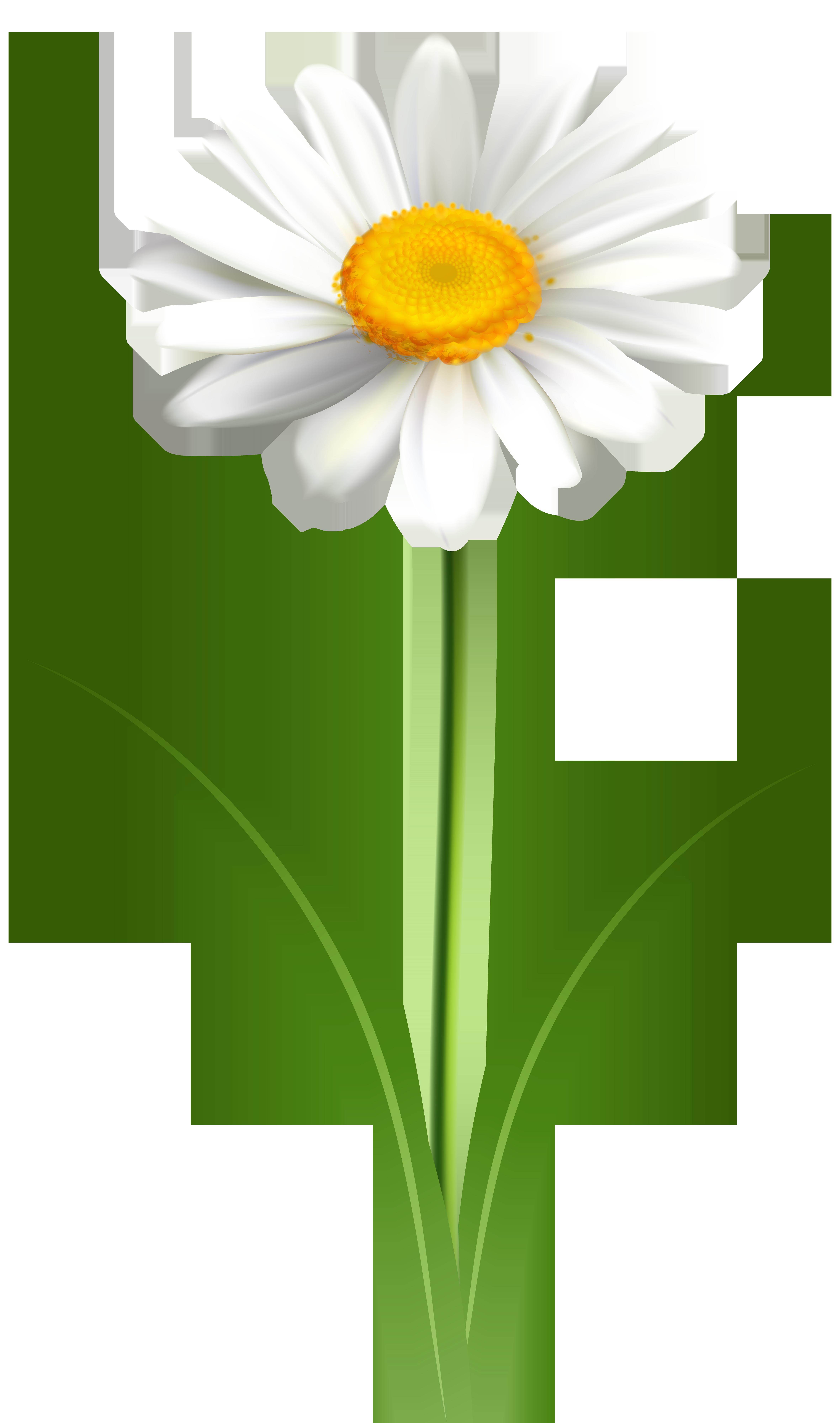 clip art free download Flower transparent png clip. Daisy clipart