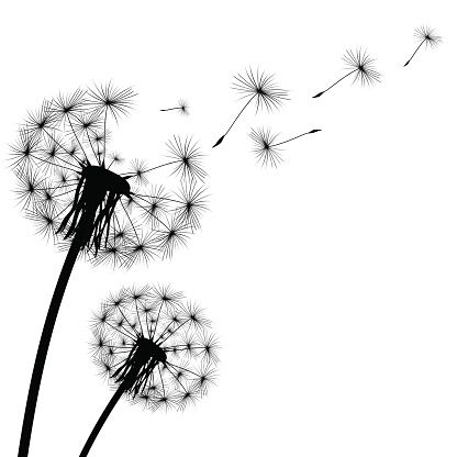 transparent library Illustrations vector images art. Dandelion clipart.