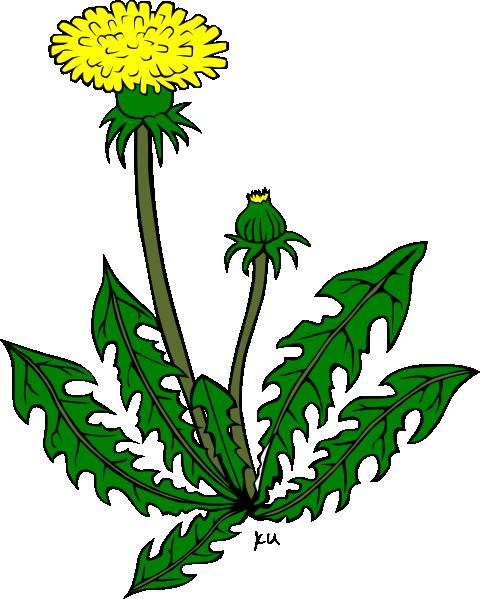 image Dandelion clipart. Flower pinterest dandelions clip