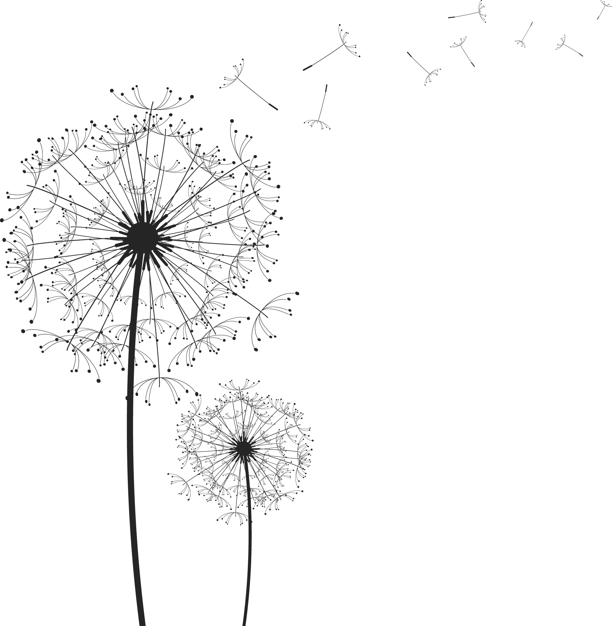 picture black and white library Dandelion clipart. Image bbe d dc.
