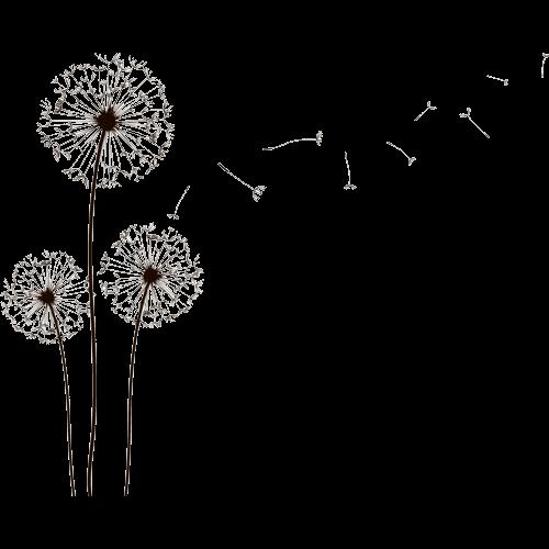 png free Dandelions tumblr bobi blog. Dandelion clipart zentangle