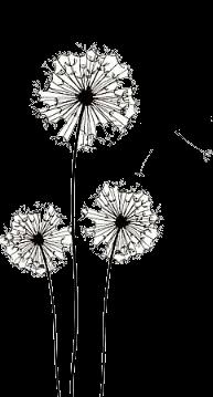 freeuse stock You look nice today. Dandelion clipart zentangle