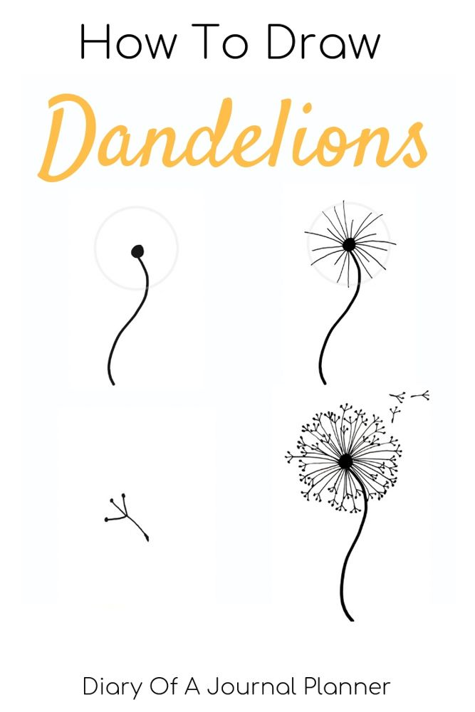 clip art How to draw a. Dandelions drawing step by
