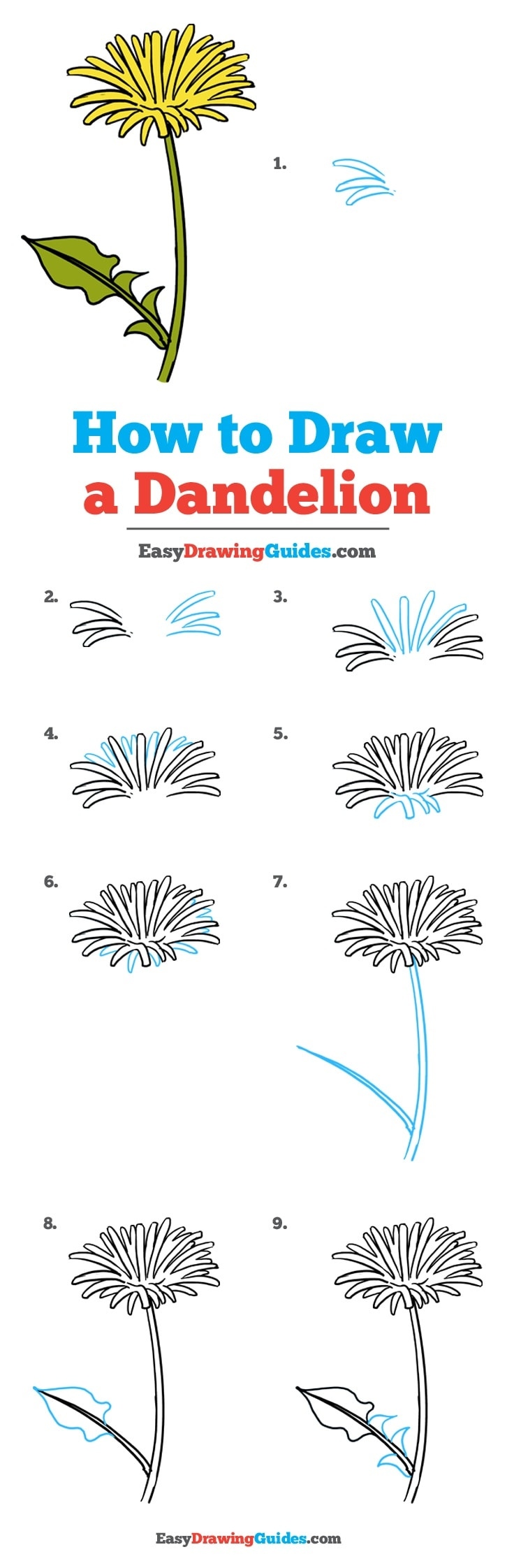 clipart free download Dandelions drawing step by. How to draw a