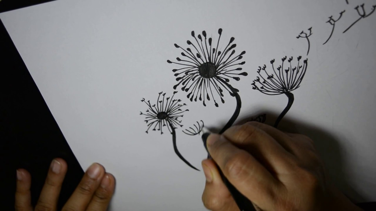 image library stock How to draw . Dandelions drawing step by