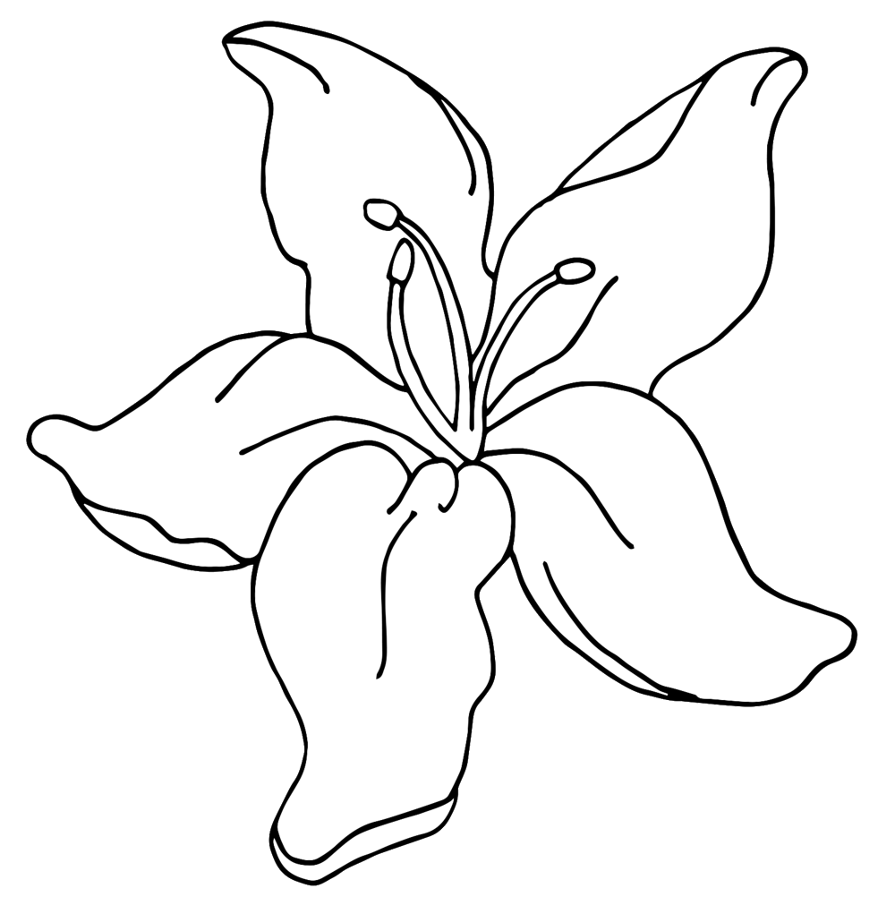 clip art free Daylily Drawing at GetDrawings