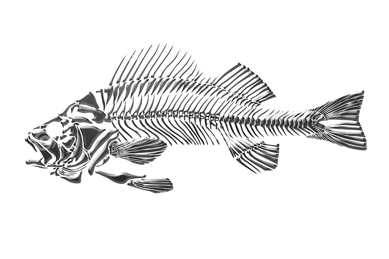 clip art library stock Fish skeleton transprent png. Dead drawing