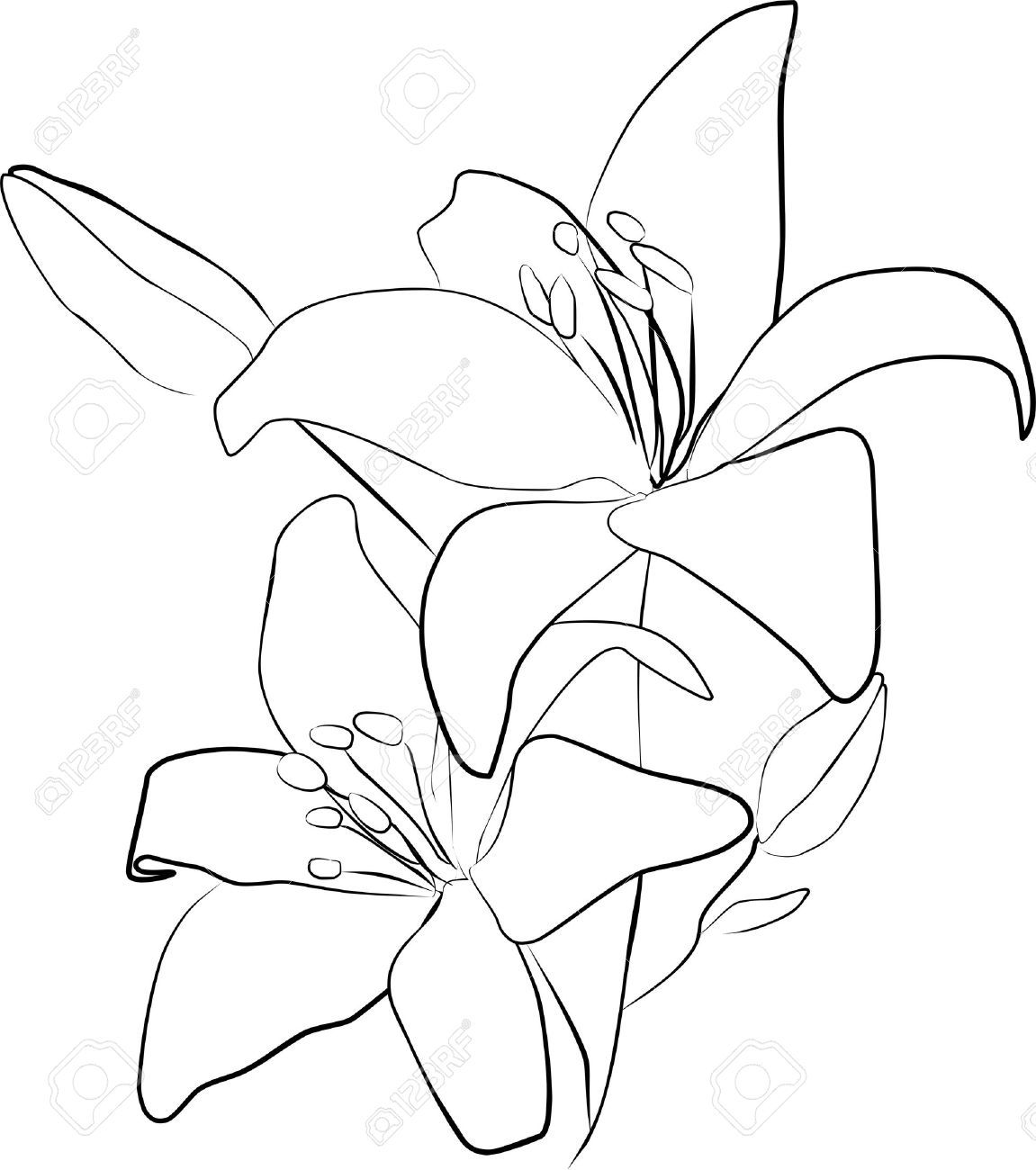 svg free stock dead lily flower