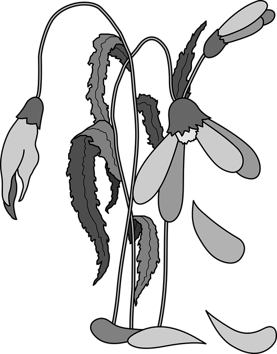 picture freeuse stock  collection of dying. Dead plants clipart