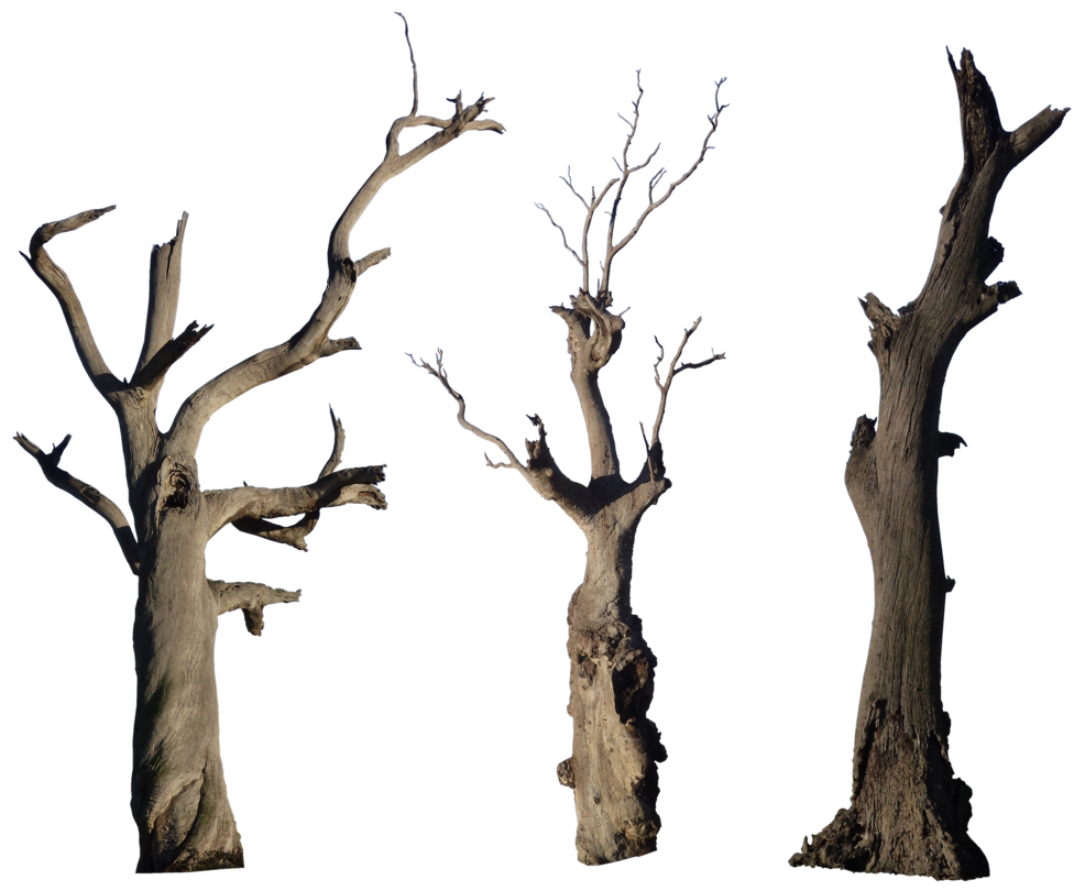 jpg library stock Tree pack hb by. Dead plants clipart