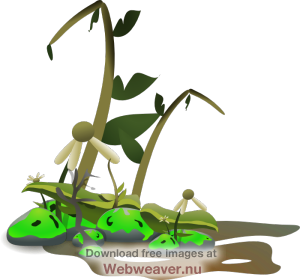 jpg library stock Dying plant . Dead plants clipart