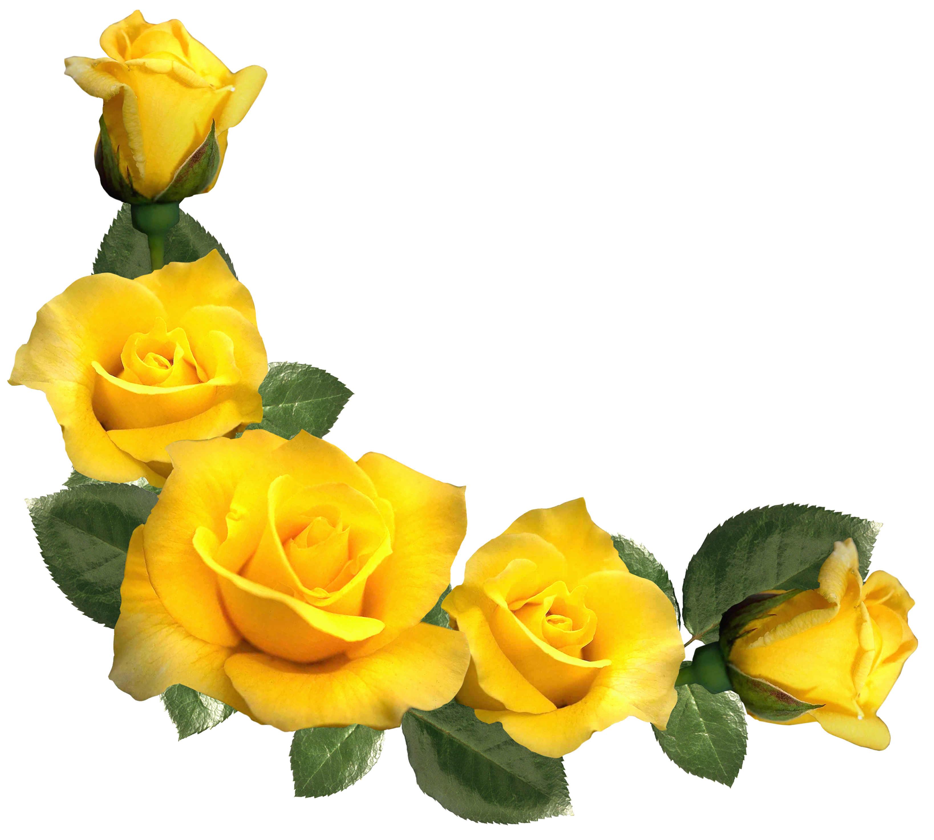 clip art library library Decoration clipart yellow. Beautiful roses decor png.
