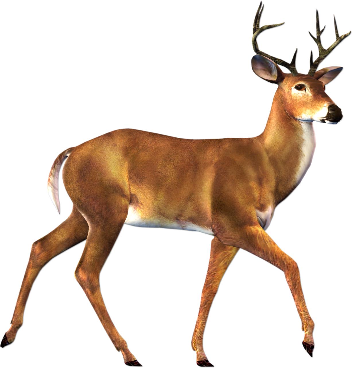 picture freeuse download Deer buck clipart free clip art images image