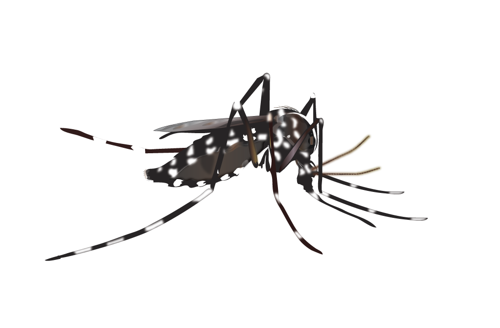 clip black and white stock Vector born arthropod. Greater los angeles county