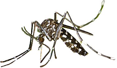 clipart royalty free download Dengue Fever