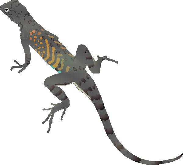 image freeuse desert lizard clipart #62157300