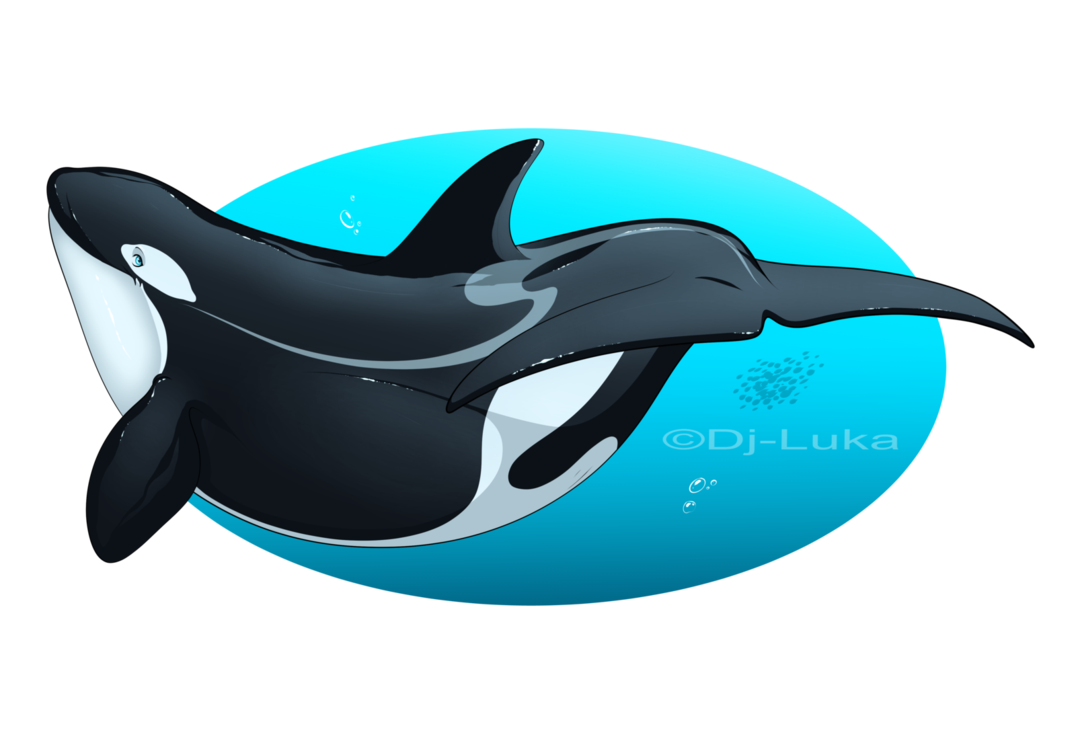 vector freeuse download dj drawing dolphin #93411670