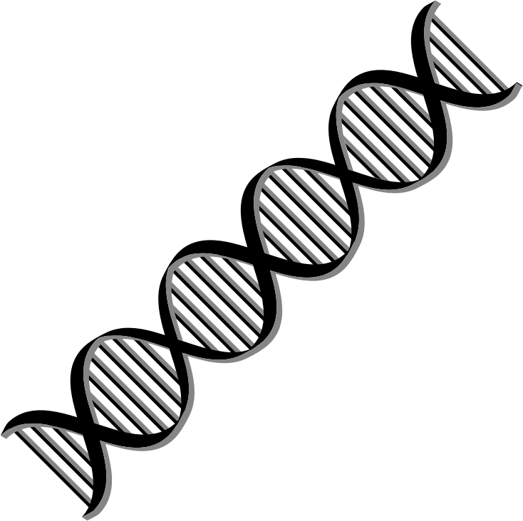 banner free stock dna clip art clipart dna helix variation