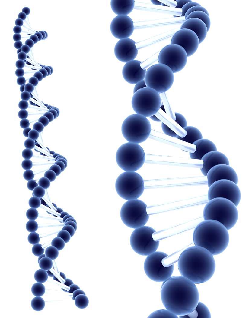 graphic royalty free download Png hd transparent images. Dna clipart black and white