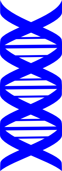 graphic library stock Blue Dna Strand Clip Art at Clker