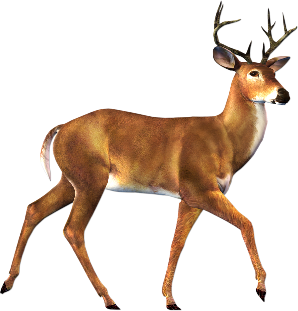 image free doe and buck clipart #60136595