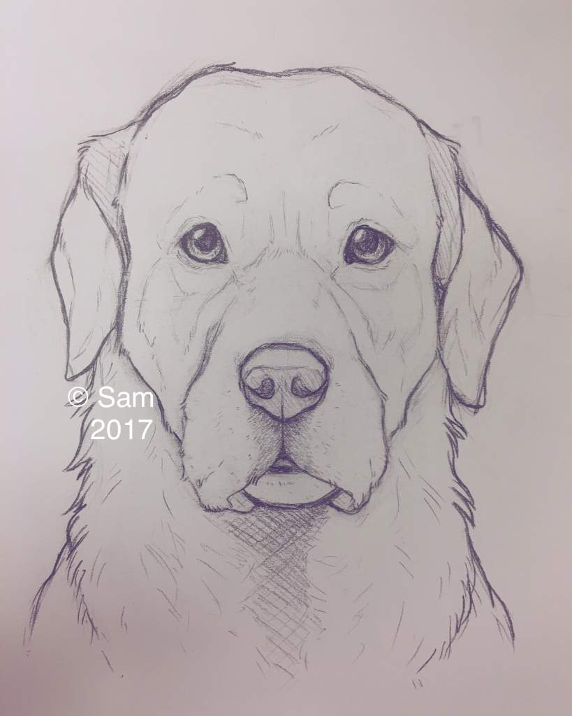 banner black and white Drawings dogs amino . Doggo drawing.