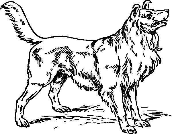clip free download Collie Dog Clip Art at Clker
