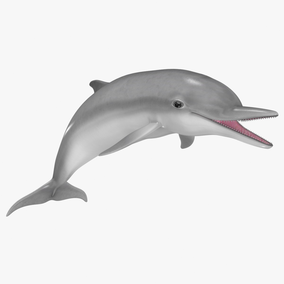 jpg free download Vector dolphin realistic cartoon. Free animated download clip