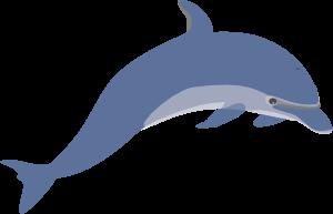 clip library Dolphin