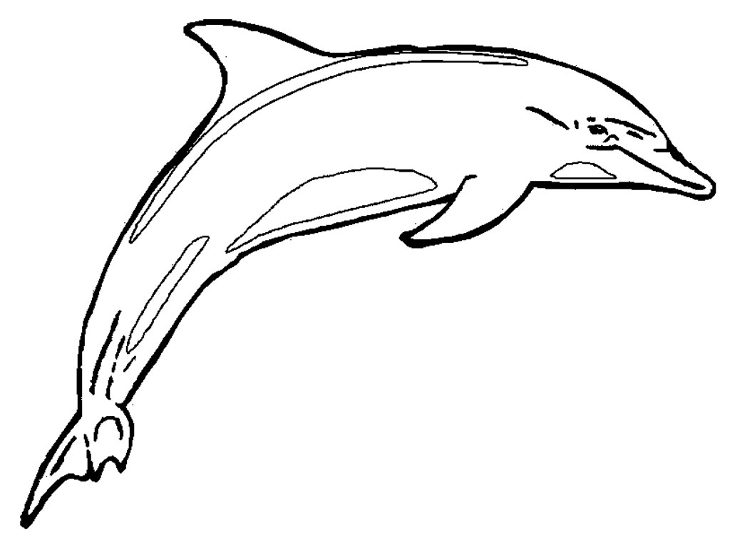 banner royalty free stock Free Dolphin Line Art