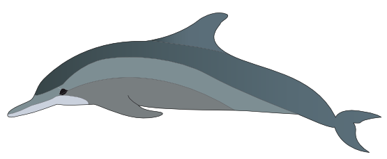 clipart library download Vector dolphin porpoise. Pin by hanjo on