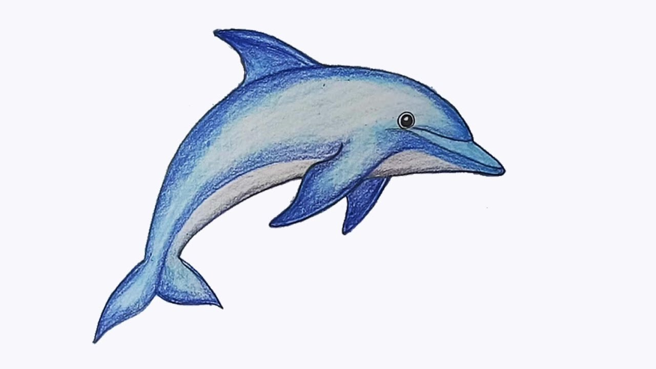 picture free download Drawing dolphin. How to draw step