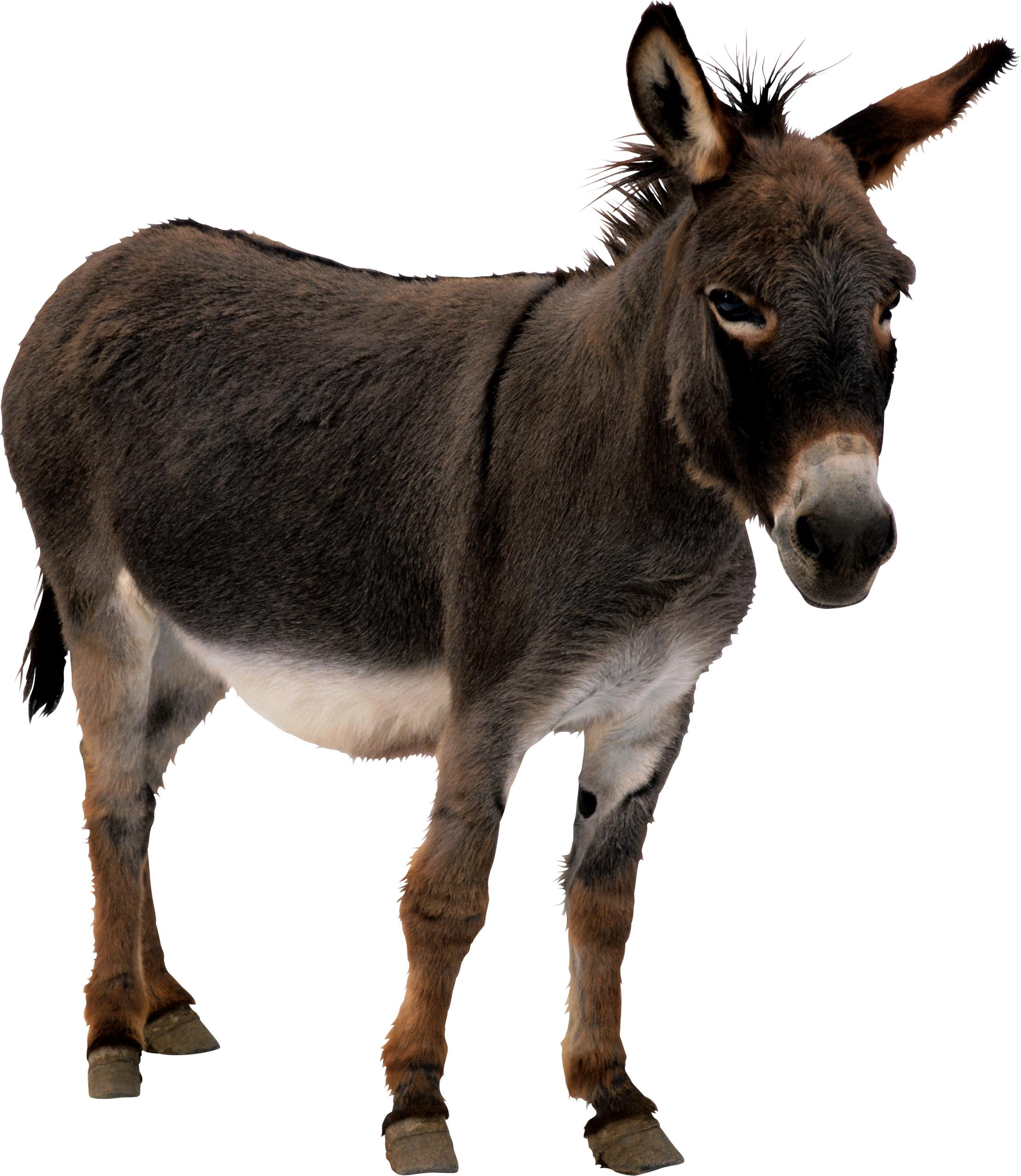 image stock Mule clipart dunkey. Donkey icon png web.