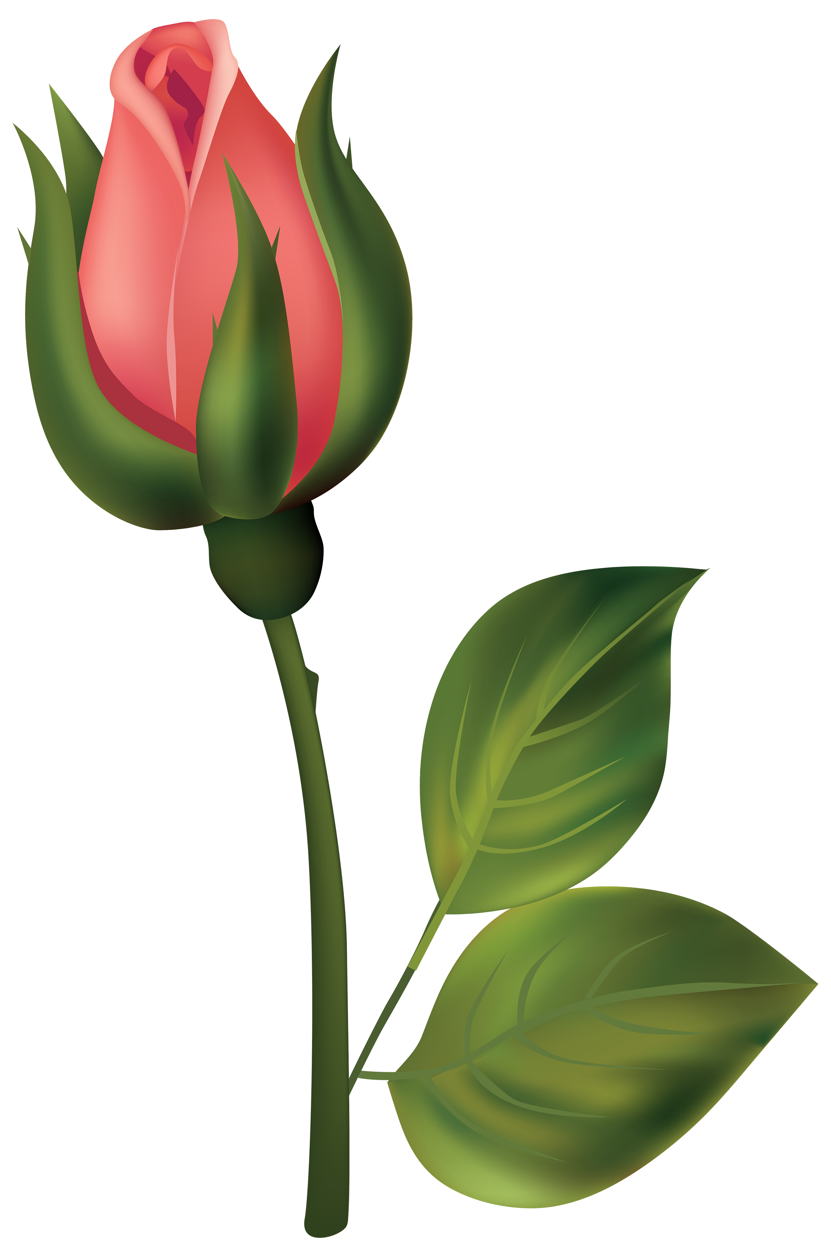 graphic freeuse Red rose bud png. Stem clipart.