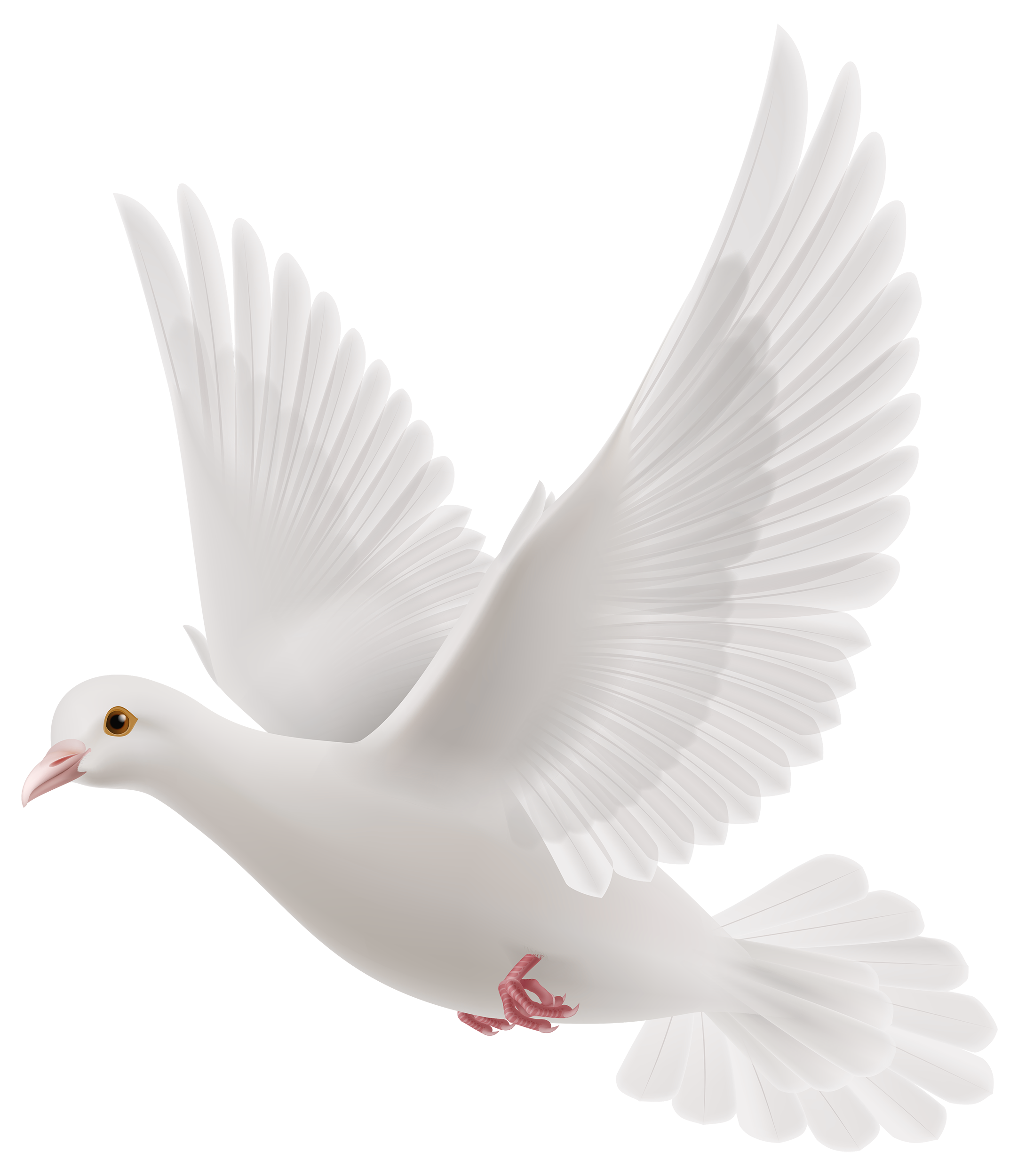 svg transparent stock White png best web. Dove clipart