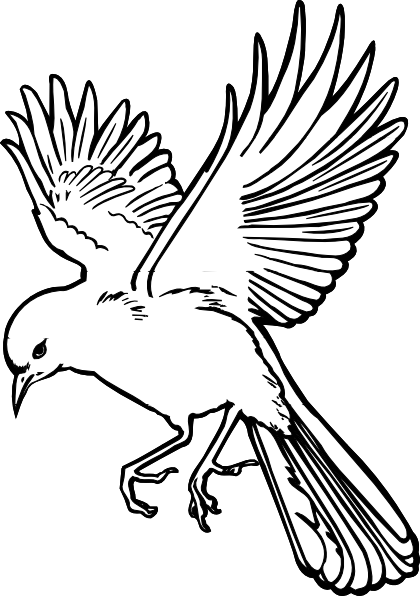 png library dove drawings