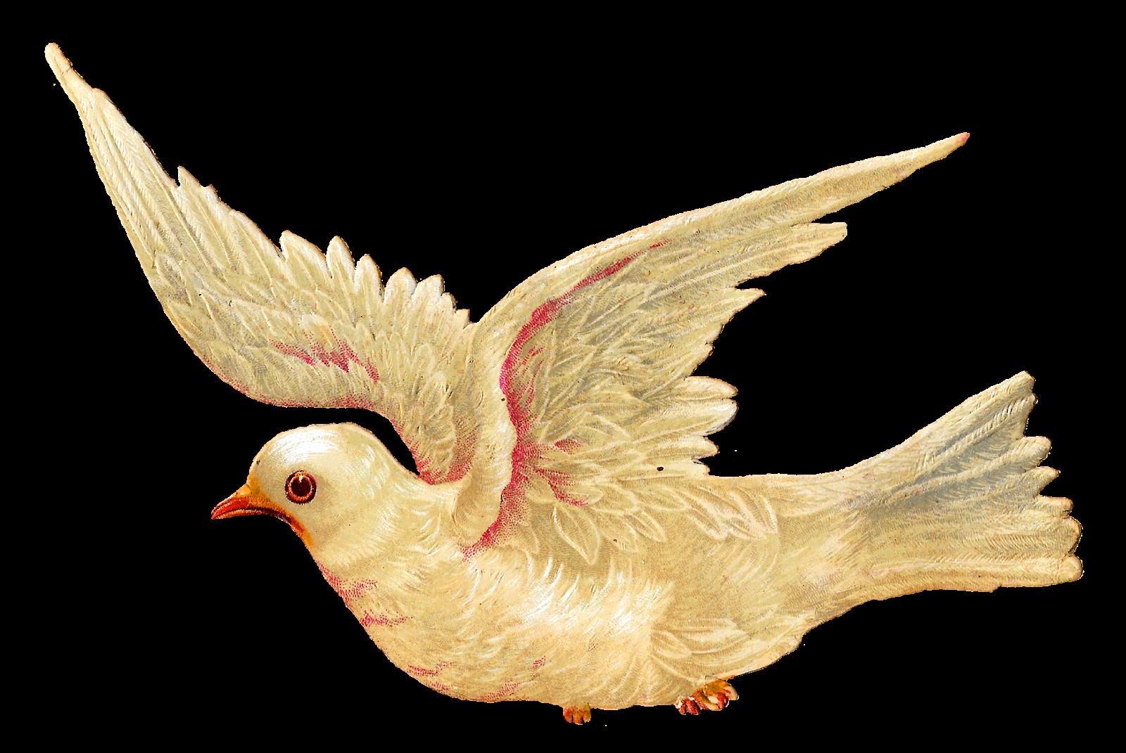 clip transparent stock Antique images white dove. Doves clipart printable