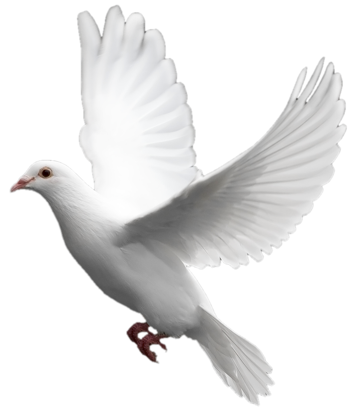 clipart library download Mourning Dove Clipart paloma