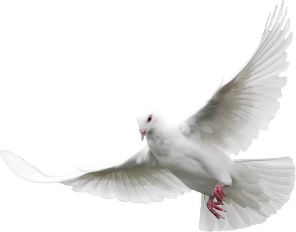 vector freeuse stock Dove png cliparts