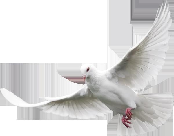 clip stock White Dove