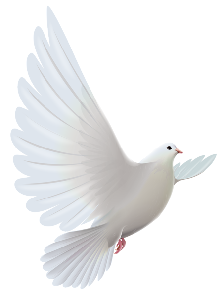 image royalty free library White Dove Transparent PNG Clipart