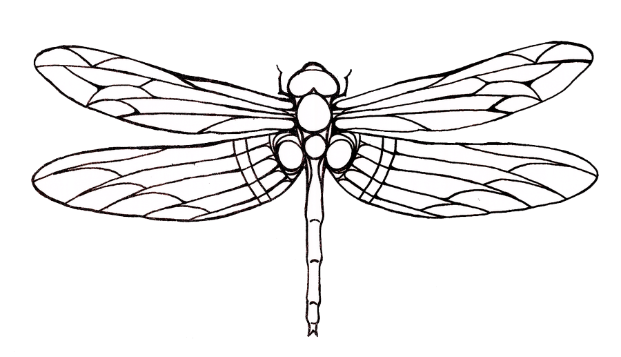 png black and white Dragonfly Tattoos Png PNG Image