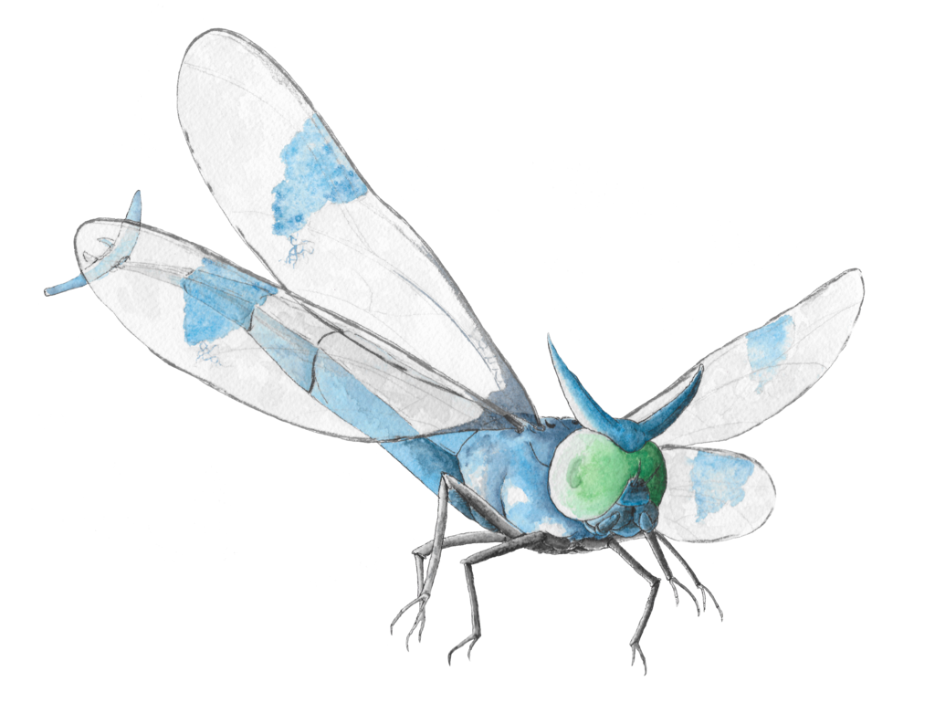 svg transparent download Pokemon community collab yanma. Dragonflies drawing realistic