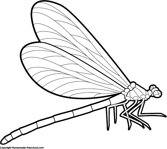 clipart stock Clipart dragonfly pinterest and. Dragonflies drawing