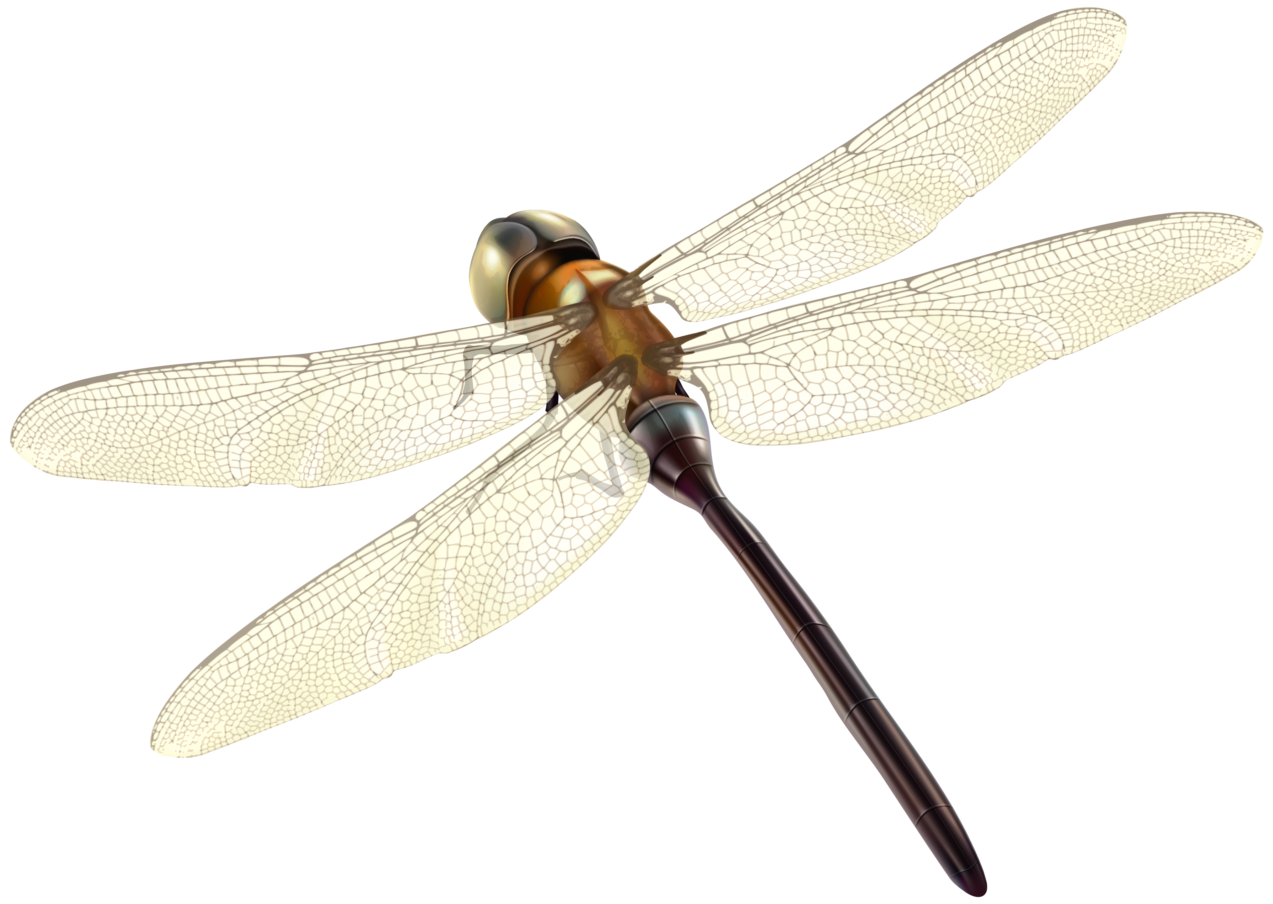 picture freeuse library Dragonfly PNG Clipart