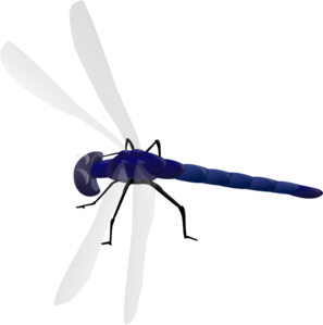 banner library stock Dragonfly Clipart realistic