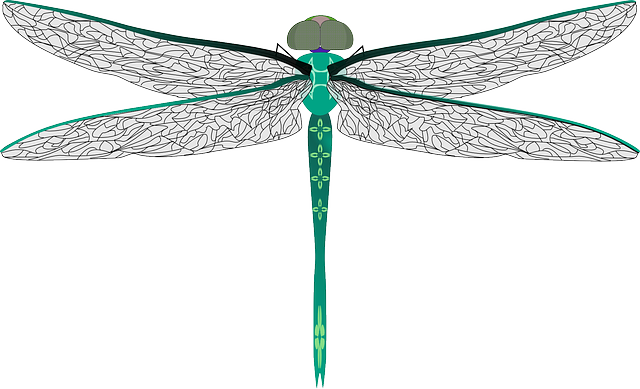 clipart transparent library Png images free download. May clipart dragonfly.